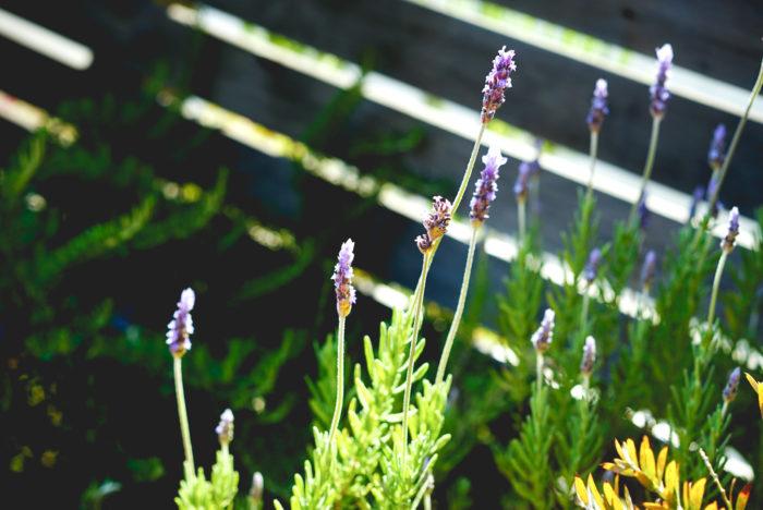 毎日庭にでていると、雨上がりはこんなにも一気に草花が伸びるんだとか、実はたくさんの鳥が訪れてくれていたんだなと、自分の家ながら庭の草花や室内の植物が思っていた以上に癒しにつながっています。