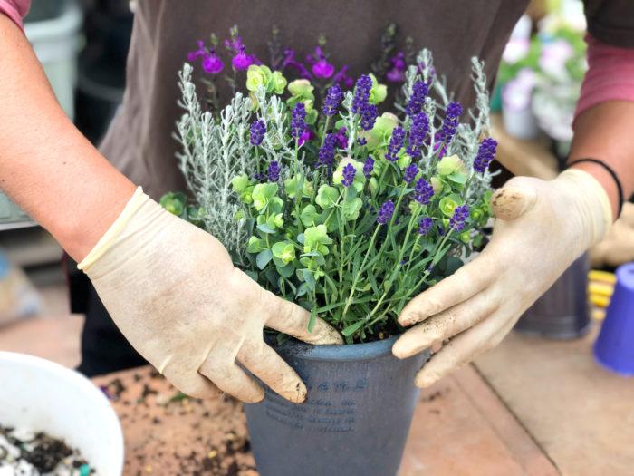 編集部:この香り、癒されますね〜。 井上さん:見るだけではなく、香りも楽しめるのが春ならでは。ぜひチャレンジしてみてください。