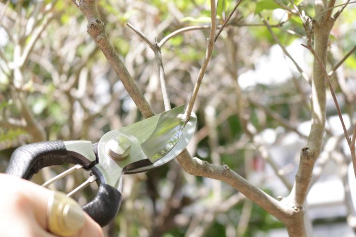 直径8㎜以内の、枝が細い庭木、観葉植物、花の茎などを切るときは刃先を使います。