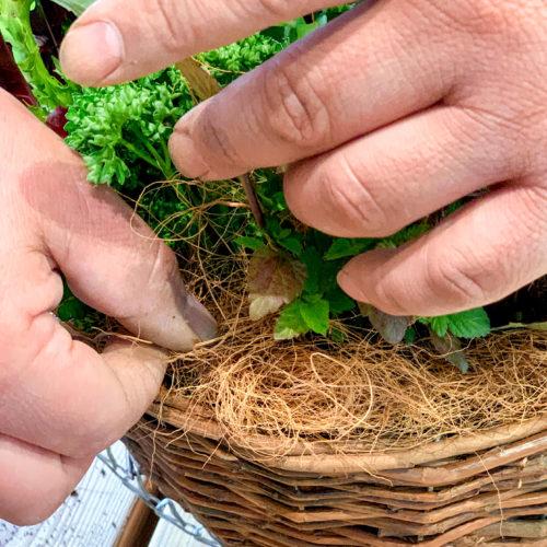 6.苗をすべて植えた後も隙間に培養土を継ぎ足します。ハンギングの縁には、水やり時の土の流出を防ぐためココヤシファイバーを植え込みましょう。