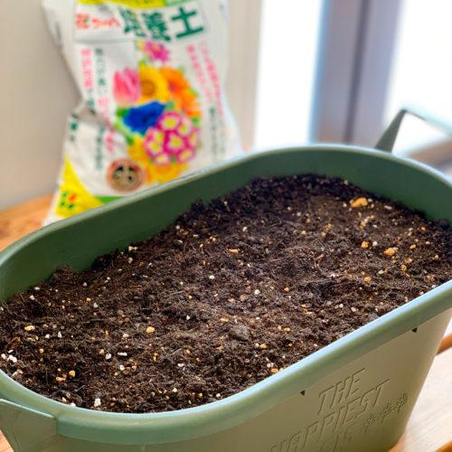 1. プランターの8割ほどまで培養土を入れましょう。培養土は肥料入りタイプを選ぶと楽ですよ。