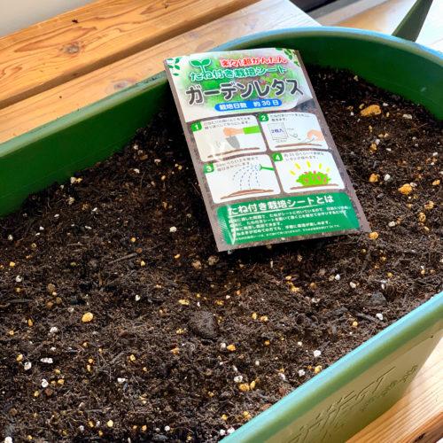 タネ付き栽培シート(全8種有) プランター 培養土