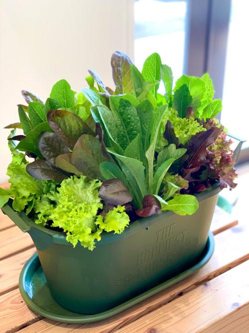編集部:すごいボリューム!自分で育てた野菜を早く食べてみたいです!  國分さん:ご自宅にいる機会が多いお子様や親御さんの食事タイムの彩りにしてもらいたいですね。