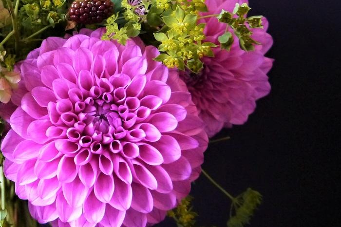 ダリアの花は咲き方(花形)の種類が非常に豊富です。ダリアの咲き方の種類は、大きく分けて次の10種類に分けられます。  一重咲き 平らな花びらが外側に1周ぐるりと開きます。ガーベラやヒマワリのような咲き方です。  アネモネ咲き 一重咲きと同じように、外側に平らな花弁が1周します。花の中心部に筒状の花びらが密集します。  コラレット咲き 外側の平たい花びらと花の中心部の間に、色の異なる小さな花びらをつける咲き方です。  スイレン咲き 平たく大きな花びらを花の中心から外側に向かって放射状に並べる八重咲きです。  デコラティブ咲き 平たい花びらを中心から放射状に広げます。スイレン咲きよりも花びらが多くボリュームがあります。  ボール咲き 花全体がボールを思わせるような、球状のフォルムの八重咲きです。花びらの先端は少し内巻きになります。  ポンポン咲き ボール咲きよりもさらに花全体が丸いフォルムをしている八重咲きです。  カクタス咲き 八重咲きです。花びらは細く先が尖り、外巻きに反転しています。  セミ・カクタス咲き 八重咲きです。花びらの基部は平らですが、先端はカクタス咲きと同じように細くなり外巻きに反転しています。  その他 その他にも一重の変わり咲きの中にオーキッド咲きと呼ばれるものや、八重咲きで花びらが不規則に並ぶピオニー咲きなどがあります。  ダリアは咲き方だけでもこんなにあります。さらに草丈もそれぞれ違います。植え付け前に開花した時のお庭の様子のイメージを固めておいたほうがよいでしょう。