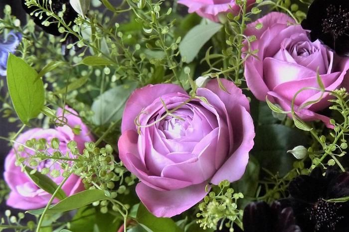 バラはヨーロッパの花のようなイメージがありますが、バラの原種はアジアにも自生しています。  バラの歴史は古く、西洋のバラと東洋のバラが掛け合わされて、多くの品種が作り出されました。バラの分類を知るとより育てやすくなります。