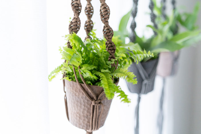 葉が長く伸びるユニークでな観葉植物のネフロレピス・ツデー。シダの仲間なので、少し日当たりが悪くても生長してくれるので、部屋の状況によって選んでみてください。