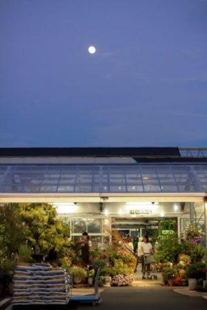 元気で活きのいい植物&マルシェオニヅカ 朝倉郡筑前町の田んぼの真ん中にあるお店は、あたたかな日差しが降り注ぐお花畑のような売り場です。生活を彩る花と緑を提案しています。