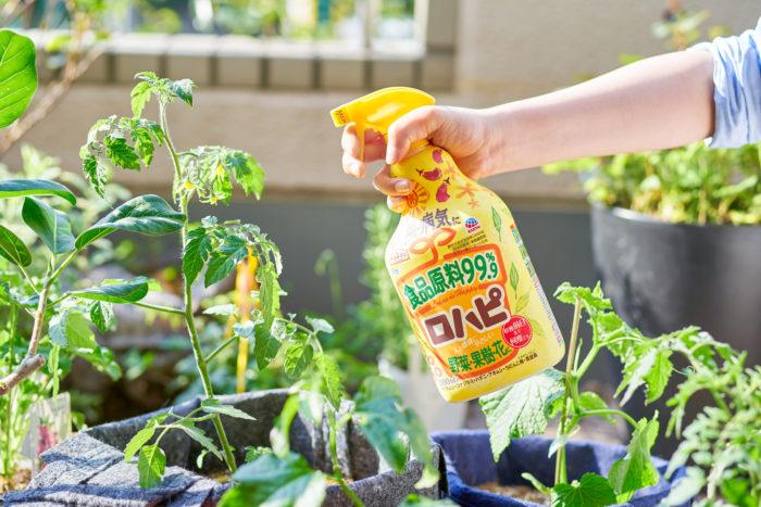 いろいろな野菜・果樹・花に使える 野菜への残留性を気にしなくて良いので、トマト・ナス・キュウリ・ピーマンといった家庭菜園の人気野菜だけでなく、オクラやズッキーニなどさまざまな野菜に使用できます。もちろん、バラ、草花、観葉植物まで、幅広い植物に使えます。さらに、ニオイもないので室内栽培にもおすすめです。