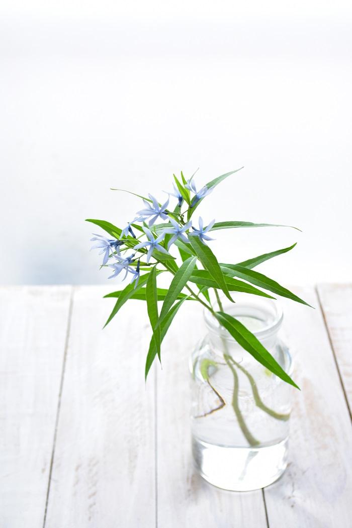 丁字草は生けて楽しむこともできます。  切り花としても短期間出回っていて、ちょうど母の日のころの花屋さんで見かける花です。