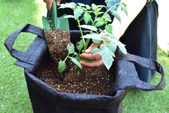 苗を中央に置いて、株元まで土を入れていきます。