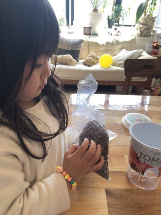 続いて、土を栽培キットに入れていきます。袋に入ったフカフカの土は、子供にとってはオモチャのように感じるようです。