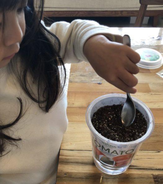 下の方から水が土に染み込んで来るため、表面の土を少しかき混ぜてあげることで早く土が染み込みます。