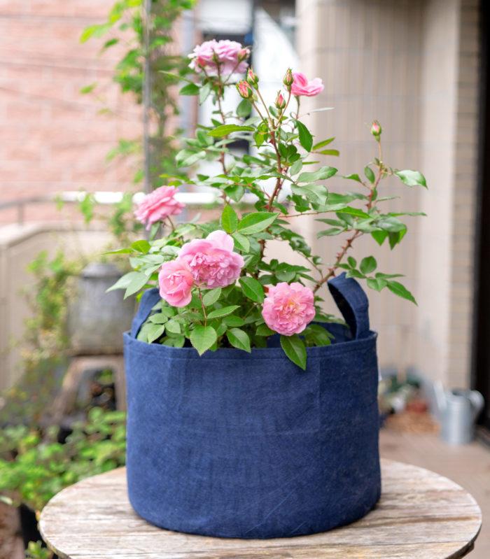 2.続いて主木となるバラ「フルーリーテラス」を植え込みます。これだけでも十分美しいですが、今回はバラの足元に草花をあしらっていきます。