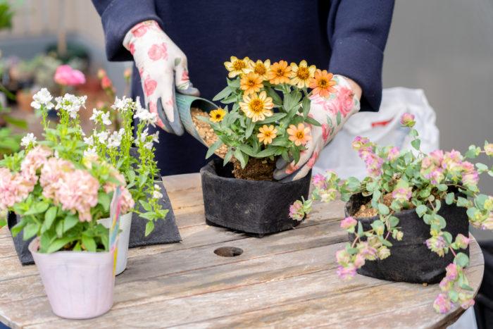 3.小さなルーツポーチに、1品目ずつ草花を植え込んでおきます。