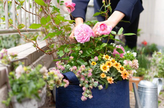 今回、ポッティングガーデンの主役を飾るのは、京成バラ園芸さんのバラ「フルーリーテラス」コレクションです。