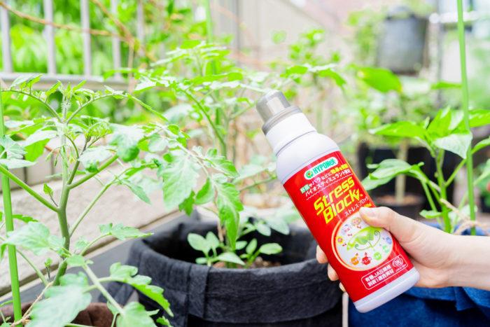 天然由来の原料からつくられたストレスブロックは、肥料や薬剤ではケア&サポートが十分ではない、気温の高低、乾燥、多湿、日照不足などに負けない強さを植物に与えてくれます。また、植物への効果はもちろんのこと、土壌改良の効果も期待できるのが特長です。