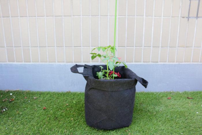 支柱を立てて、ミニトマトが強風で茎が折れたり倒れたりしないように麻ひもで誘引します。苗を傷めないように、緩めに結んだら完成です♪