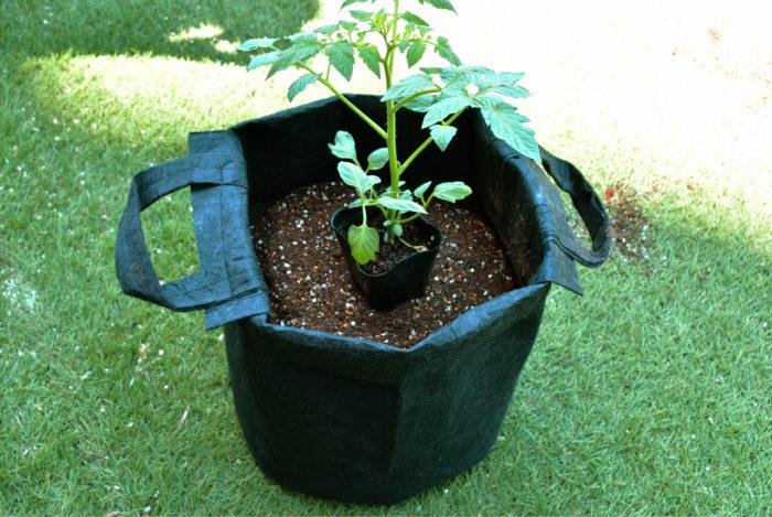 土の量の目安はこのくらい。苗の高さに合わせて入れます。