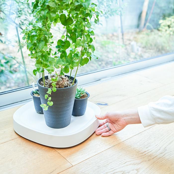 そんなお悩みを解決してくれるのが「プランタブル」。プランタブルは前後左右自由に動かせるキャスター付きの鉢トレーです。フローリングの床でも傷つけることなくスムーズに移動できます。これひとつで植物の移動が驚くほど簡単になるので、少し気が重くなるような植物の移動のお悩みも解消されること間違いなし。  人も植物も嬉しい 室内管理の観葉植物はどうしても日当たりが偏りがち。定期的に日の当たる場所で日光浴をさせ、元気に育てたいもの。重い鉢や大きな鉢を動かすのは大変だけれどもプランタブルがあれば移動に手間がかからず気軽にできます。まさに人にも植物にも嬉しいアイテムです。  植物の模様替えも楽々!気が向いたときにいつでもできるのは嬉しいですよね。