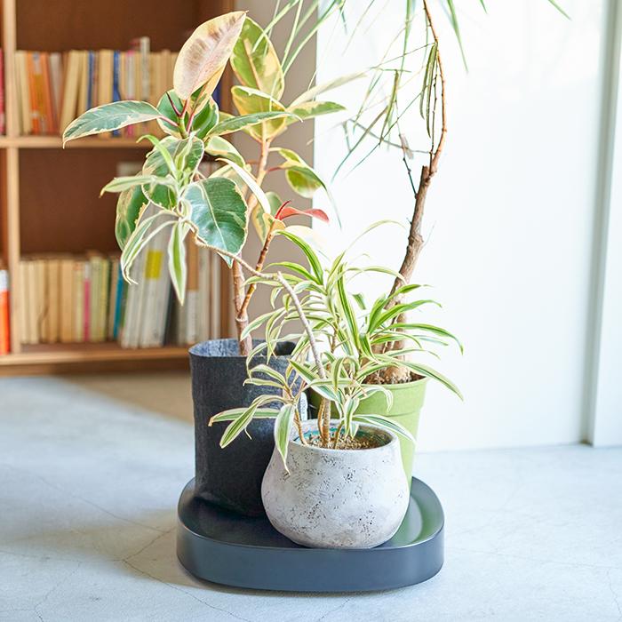 小さな鉢を何点かまとめて乗せておくのも良いですね。移動もかなり快適になります。  その他 プランタブルの耐重量はS、Lサイズ共に40㎏。お米の容器や買い置きのペットボトルのお水が入った段ボールなど、重いものを移動させるときも便利。植物を飾るだけではなく、アイデア次第で様々な使い道が見つけられそうなアイテムです。