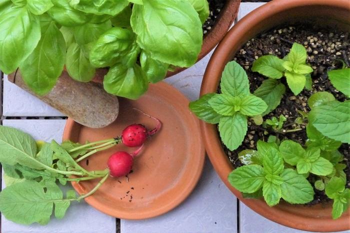 ガーデニングにルールはありません。可愛いと思った植物を育てることがガーデニングです。初心者さんでも大丈夫。自分らしいガーデニングを始めてみましょう!