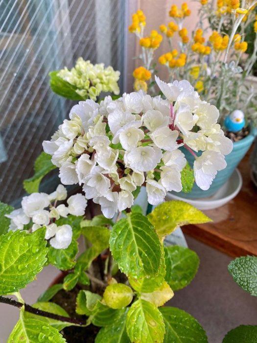 中には初夏を代表する花である紫陽花も。