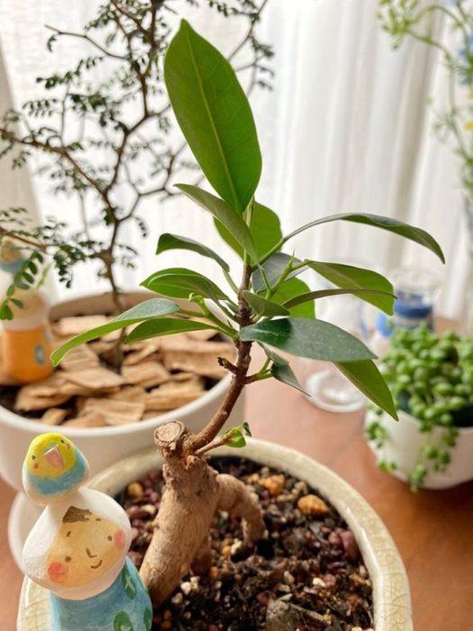 観葉植物もすくすくと生長しています。鉢の上のオブジェは作家さんにオーダーして作ってもらった一点物。