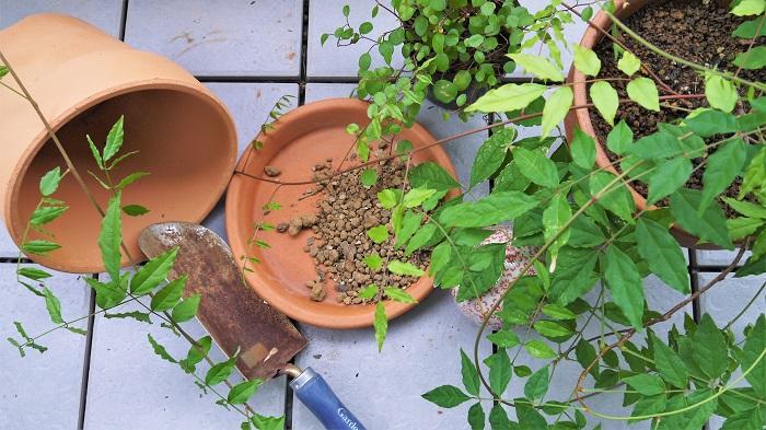 ガーデニングを始める前に知っておきたいガーデニングの基本情報を紹介します。  植物の置き場所 園芸店やお花屋さん、ホームセンターで販売されている植物は屋外で育てる植物と室内で育てる植物の大きく2つのタイプに分けられます。  屋外向きの植物は、日光と水の他に風も必要とします。屋外向きの植物を室内で育ててもあまり上手く育ちません。  反対に室内向きの植物を屋外に出してしまうと、日光や気温でダメージを受けて枯れてしまうこともあります。 購入前に植物の育て方を確認しましょう。  鉢への植え替え方の基本 植物を鉢に植える時には必ず、鉢の底に鉢底ネットを敷いて鉢底の穴を塞ぎます。その上に鉢底石を1~2㎝敷いてから培養土を入れるようにします。  鉢底ネットは鉢底の穴から虫が侵入するのを防ぎ、鉢底石を敷くことで水が流れやすくなります。鉢の排水性が悪いと、根腐れの原因となります。  水やりについて 鉢植えの水やりの基本は、土の表面が乾いて白っぽくなったら、鉢底から水が流れ出るまでたっぷりと行います。水やりが足りないと植物は枯れてしまいます。水が多過ぎても根が腐って枯れてしまいます。  庭植えの植物は鉢植え程頻繁に水やりの必要はありません。夏の高温乾燥が数日続くような時には水やりを行い、降雨が続くような季節には控えるようにしましょう。  土について 植物それぞれ好みの土も違います。植物にとって土はとても重要です。庭植えにする時も闇雲に植えてしまわないで、周囲に適切な用土を入れてから植えるようにすると、よく育ちます。  市販の園芸用培養土は、ハーブ用やバラ用、野菜用などそれぞれに合ったものが用意されているので、上手に利用しましょう。  肥料について 肥料をたくさん与えたほうが植物がよく育つ、というのは危険な考えです。なぜならば過肥にすると病害虫にかかりやすくなったり、株が弱ってしまったり、というデメリットもあるからです。肥料はその植物に合ったものを適宜与えるようにしましょう。
