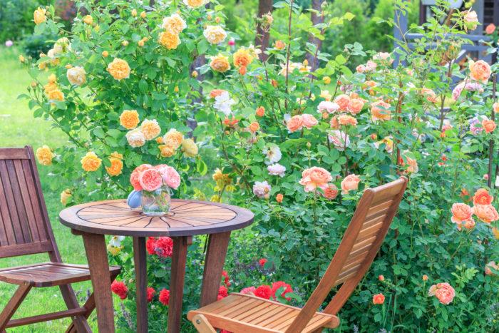 土づくりがしっかりとしていれば、バラは自分の力で夏の暑さに打ち勝ち、元気にたくさんの花を咲かせてくれます!