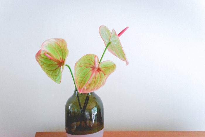 """春先から最近まで私のフラワーブランドgui で登場回数が一番多いのは、""""アンスリウム""""。個性的なルックスですが、色と形を選ぶと他の草花とも合わせやすく、少ない本数で飾っても長く楽しめる優秀なお花です。写真は「マライケ」という種類で、グリーンとピンクが絶妙に混ざっています。"""