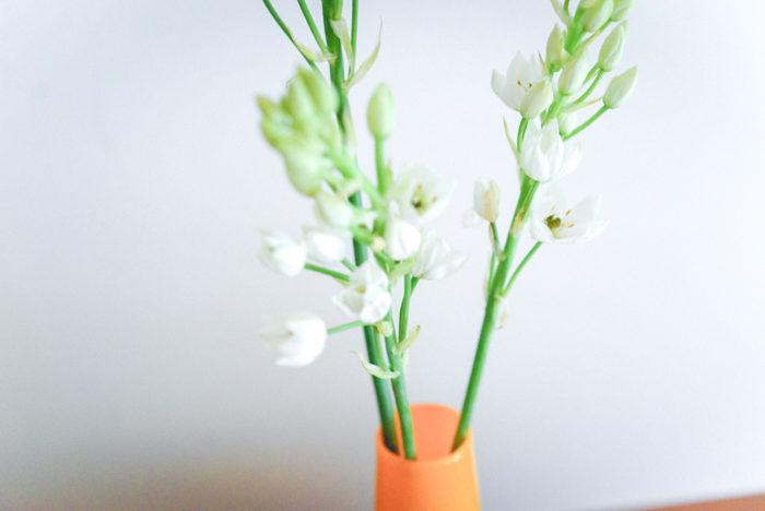 この季節におすすめの夏の暑さに負けないお花たちをご紹介しました。日持ちするお花を飾って、お家空間をより彩りのあるものにしていただけたら嬉しいです。暑さに負けずにたくましく咲いている草花からたくさん元気をもらえるはず。