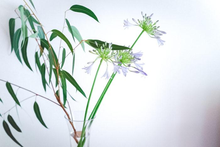 """自宅の庭でも咲いている""""アガパンサス""""。公園の植栽などでも目にすることが多いお花ですが、もちろん切り花として飾ることもできます。涼しげな透明感のあるブルーが、とっても爽やか。ユーカリなどのグリーンと一緒に飾るとより涼やかに楽しめます。線を生かして、長く伸びるように生けてあげると、自然の風景が感じられて、ほっとくつろげる空間になるでしょう。"""
