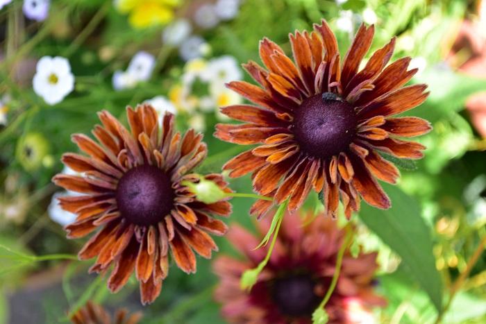 6月の園芸店で花を選ぶなら「暑さに強くて手入れが簡単な花」がおすすめ。梅雨から真夏へと移行するガーデニングは、長時間のガーデニング作業が難しい時期です。そんな中でも美しい庭やベランダにするには植物選びは重要です。