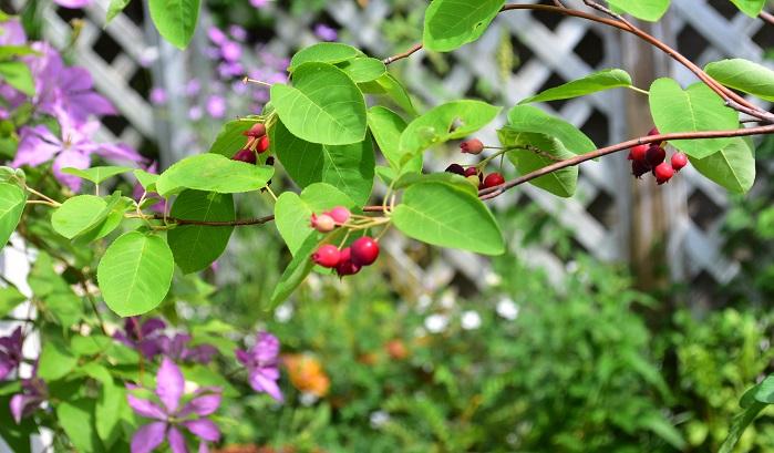 ナチュラルガーデン、ナチュラルガーデニングとは自然植生的な雰囲気を楽しむガーデニングのことです。風が抜けるような、植物が自由に生長しているお庭です。