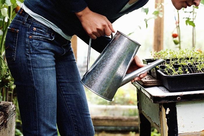 鉢植えの水やりの基本は、土の表面が乾いて白っぽくなったら、鉢底から水が流れ出るまでたっぷりと行います。水やりが足りないと植物は枯れてしまいます。水が多過ぎても根が腐って枯れてしまいます。