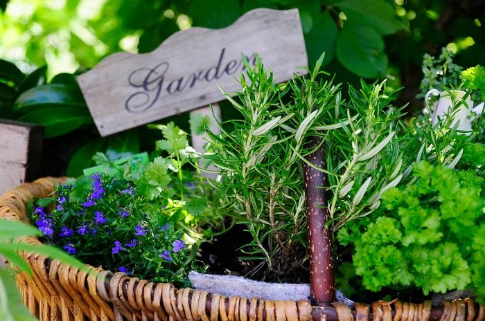 プランターや鉢でガーデニングを始めてみましょう。プランター(鉢植え)ガーデニングは、季節に応じて植え替えたり、レイアウトを変えたり、場所を移動させたりと、管理がとっても楽になるメリットがいっぱいです。