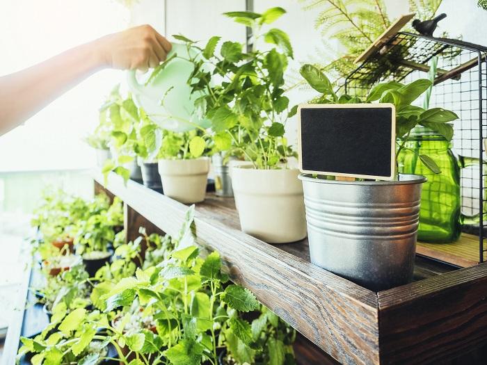 Gardening(ガーデニング)の日本語の意味は「園芸、庭いじり、造園」です。園芸とは、植物を植え育てること、造園は庭を作ること。つまりガーデニングとは、植物を育てながら、庭を作ることを指します。自宅のお庭やバルコニー、玄関ポーチなどで植物を育てて愛でて楽しむ、それがガーデニングです。