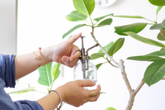 観葉植物で効果がある予防方法は、枯れ葉などを取り除いてからダコニール1000などの予防殺菌剤を散布することです。