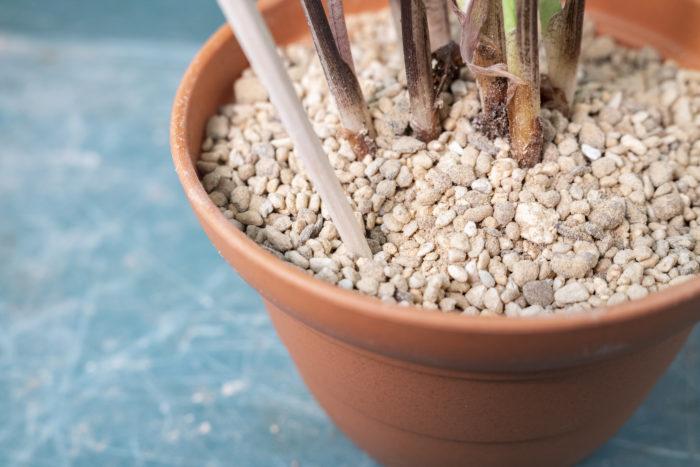 観葉植物の高さが定まったら、周りに土を入れていきます。