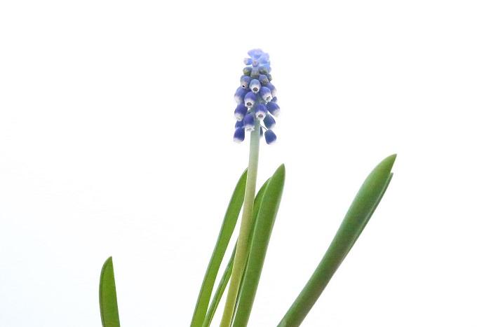 自宅で植物を育てることがガーデニングです。1鉢からでも大丈夫。気になる植物があったら自宅で育ててみましょう。とっても簡単なガーデニングの始め方です。