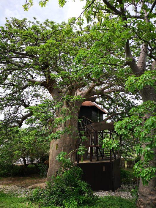 これは、バオバブのツリーハウスである。バオバブや大自然にあこがれを持つ人にとっては、うっとりする存在であろう。