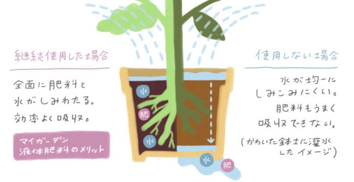 古い土はだんだんと固くなってしまい、水が均一にしみこまなくなり肥料もうまく吸収できなくなります。マイガーデン液体肥料を継続して使用すると、土全体に水や肥料がしみわたるようになるので、根が効率良く水や肥料を吸収することができ、植物がどんどん元気になります。さらに、チッ素多めの新リッチ処方(N:P:K=9:10:5)だから、植物がしっかり育つのもうれしいポイント。