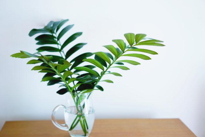 ザミアは、もともと鉢植えでも大好きなメキシコ原産の植物。育てるのは少し難しいのですが切り花としても長持ちなので、気楽に水にいけて、その特徴的なシルエットを楽しむのもいいですね。