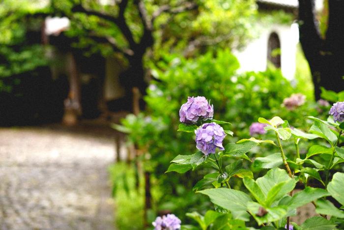 長く連載を続けさせてもらっているこちらのコラムですが、3月以降は自宅から記事を綴ることがメインになりました。そのため、季節の花あしらいだけではなくて、日々の暮らしの中で訪れた自然のある場所やおすすめスポットをご紹介することも増えました。  鎌倉に住んでいてもなかなか行く機会のなかった鎌倉山。ちょうど臨月に入り、あまり遠くにはでかけられないため、先日の週末に家族で思い切っていってみることにしました。