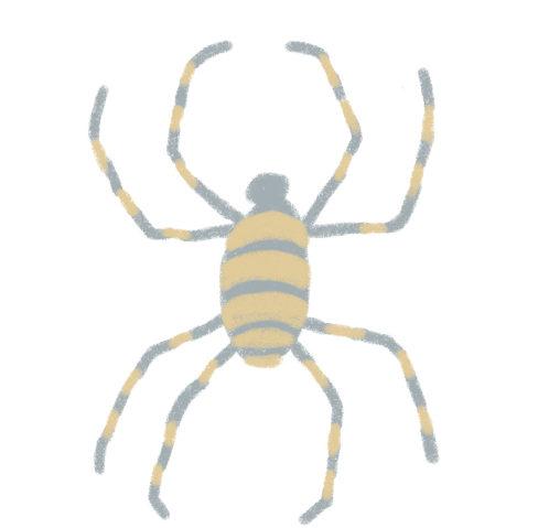 日本に分布するクモの多くはゴキブリやハエなどを捕 食してくれるありがたい存在ですが、見た目の迫力や クモの巣が清潔感を損なう心理的な害から嫌う人も多 いです。また、多くのクモは人に無害ですが、セアカ ゴケグモなど有毒性のクモもいるので注意しましょう。