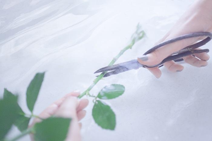 前項までは園芸用語の切り戻しの説明でした。切り戻しという言葉は、切り花を生けるときにも使います。