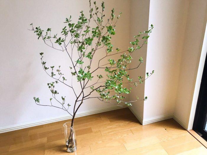 長く華奢な枝ぶりが美しいドウダンツツジを上手に花瓶に生けるコツはバランスです。花瓶の高さが高すぎてもドウダンツツジの枝の長さが生かされません。花瓶の高さに対して1.5倍くらいのドウダンツツジの枝を選ぶとバランスよく収まります。
