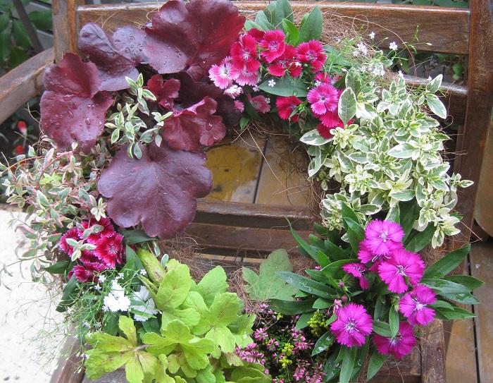 季節の移ろいを感じるようになる9月は、日中まだ厳しい暑さが残っていたり、少し涼しい日があったり。夏の名残を感じながらも秋の香りを楽しめるようになり、暑さがやわらいでくると植物も人間と同じようにほっとした表情になって花や葉がみずみずしく変化するように見えます。  この季節の変わり目に秋に美しく咲く秋ならではの苗をそろえて、しっとりとした秋の寄せ植えをつくりましょう。9月早々に寄せ植えをつくっておくと、秋本番にはしっかりと根付いて華やかな鉢に生長します。  秋らしい植物を使うと、野の趣があふれる寄せ植えができます。こっくりとした色合いの花をメインに、実もの、グラス類をポイントにして苗選びをするのがおすすめです。  今回紹介する花とカラーリーフの中から好みの苗を3ポット組み合わせるだけでも秋の寄せ植えができます。花色や咲き方も様々あるので好みの組み合わせを見つけられるはず。通年出回っている花やカラーリーフであれば、秋色を選ぶといいですね。園芸店の苗売り場にも、秋の苗がたくさん並び始めているのでは。ぜひ、秋の寄せ植えをつくってお楽しみください。