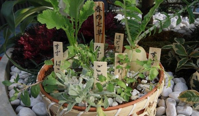 1月7日は七草の日! 七草粥の作り方をご紹介 | LOVEGREEN(ラブグリーン)