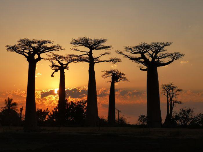 そしてビュースポットに腰を下ろして、バオバブの間を沈んでいくように観える夕陽にしばし心を奪われていた。